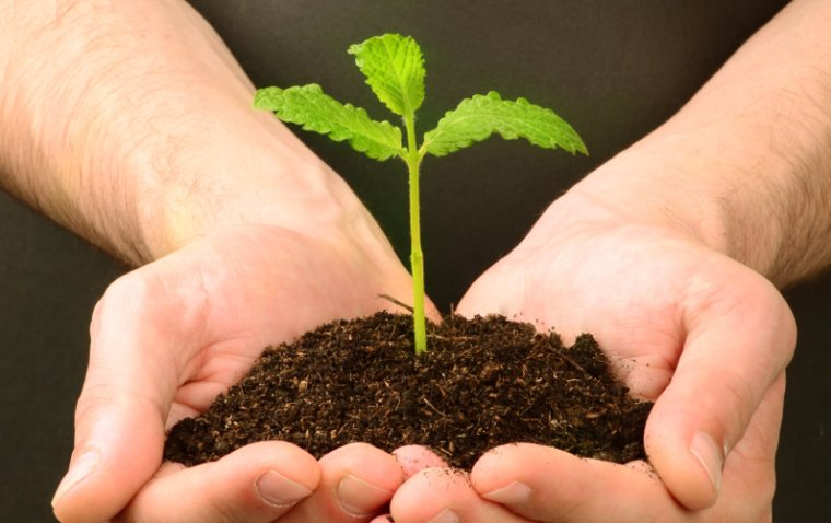 How to Grow your Startup: You Need These 2 Things