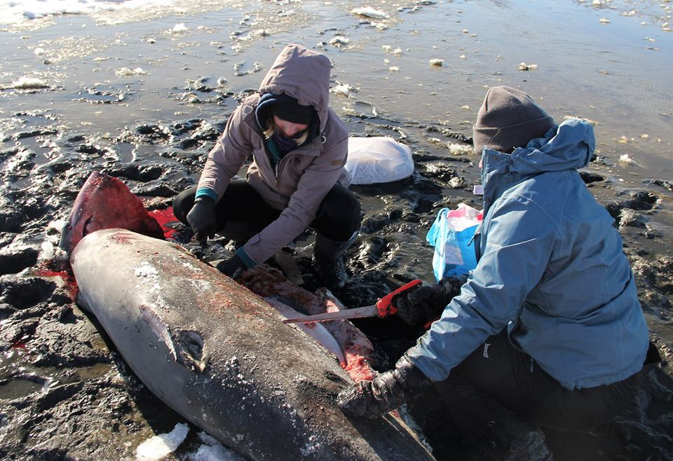 Sharks found frozen solid during cold snap in US