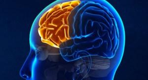 otizmli-bireylerin-beyinleri-alisilmadik-sekilde-simetrik-ozellik-gosteriyor-bizsiziz