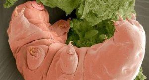tardigrad-bizsiziz