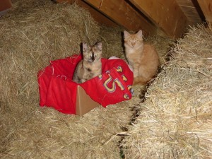 Trapping feral cats has its challenges. (Photo courtesy Friends of Feral Felines)