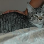 Feral cats benefit from TNR programs