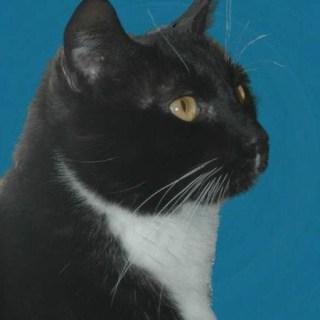 Meet the cats: Tuxedo Boy Clyde