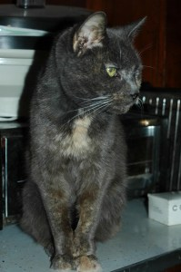 SIs cat Smokey Blue in Heaven or waiting for her human on the Rainbow Bridge?