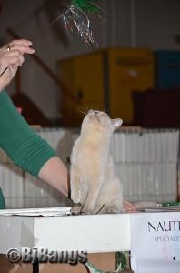 2013 NauTICAts Cat Show (32)