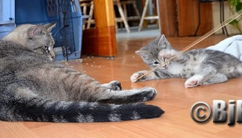 Big kitty meets baby kitty