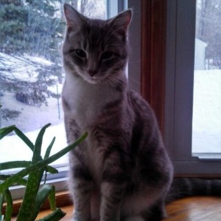 Keep cats safe and inside in winter