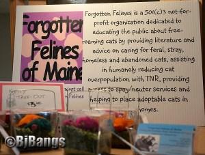 Forgotten Felines of Maine