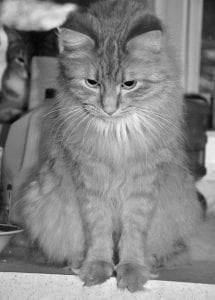 Little Yellow Cat