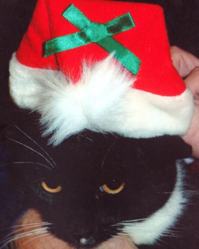 Clyde in santa hat