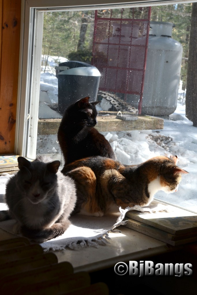 These once outside cats enjoy the warmth of home.