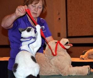 Arden Moore and Zeki teach pet first aid