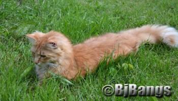 Kitty Paws soaks up the sunshine.