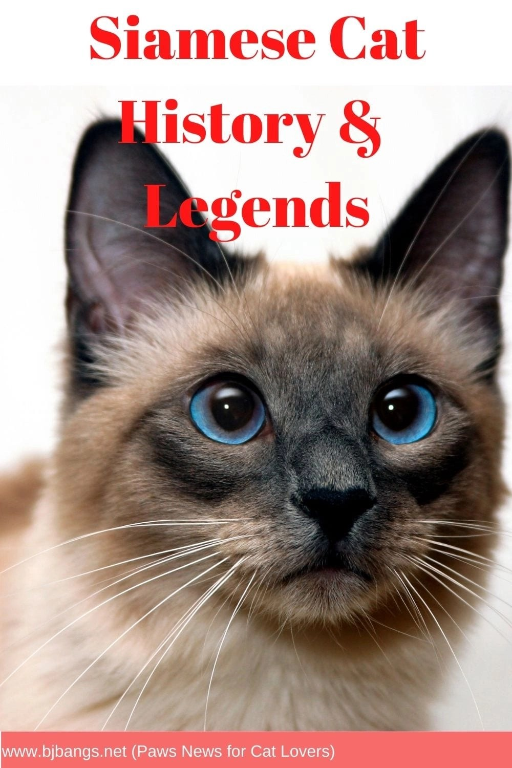 Pin of Siamese Cat talking about Siamese Cat History