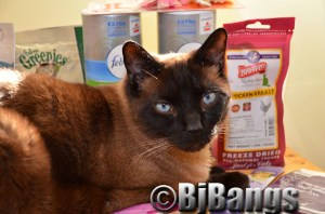 Siamese says thanks to all the cat writers for all these goodies.