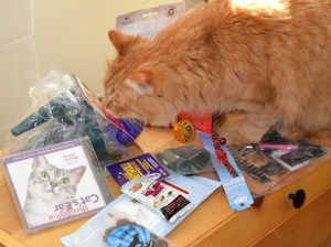 Kitty can't wait to check out all this CWA swag.