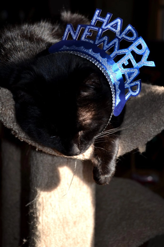 Kitty is hung over and suffering from winter doldrums.
