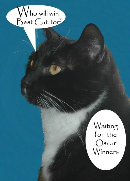 Cat waits to see who will win best Cat Actor at the Oscars.