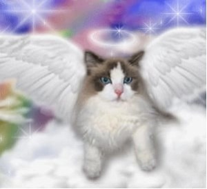 Cat cats go to Heaven? Over 40% of American pet owners believe they do.
