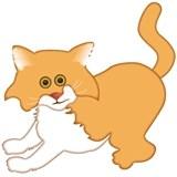 Carmella The Cat