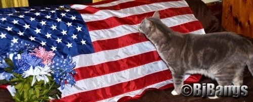 Cat Lenny pledges allegiance to American flag