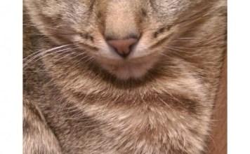 Gwen Cooper's 'Kittenish', helps animals in Nepal's major earthquake.