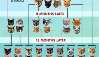 Cat pyramid, Cat overpopulation chart
