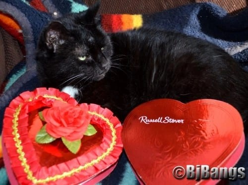 This black cat has a heart of gold, so much so she has 2 valentines cause she is just extra special