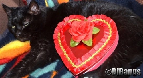 A special Valentine for a special cat