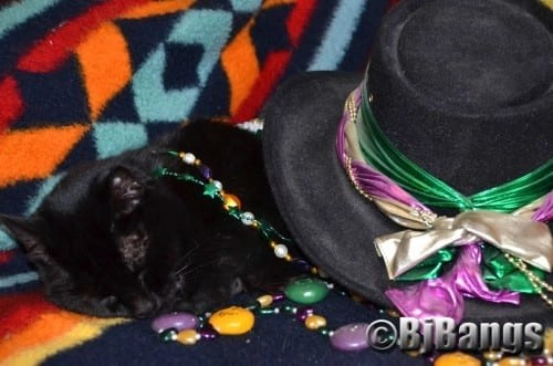 Cat Pink Collar wonders can I stay awake for the Mardi Gras Grand Finale, or shall I just sleep through it all