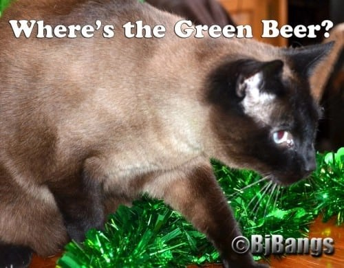 Siamese Linus is looking for the Green Beer, a St. Patrick's Day favorite, for humans that is.