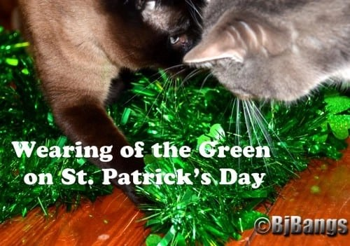 These cats are wearing the green on St. Patrick's Day