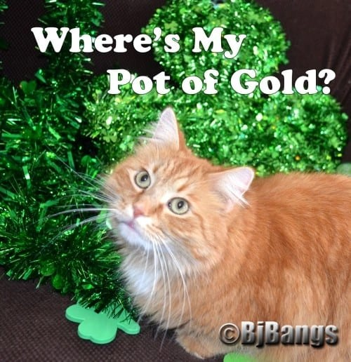 Little Yellow Cat looks for his pot of Gold for St. Patrick's Day.