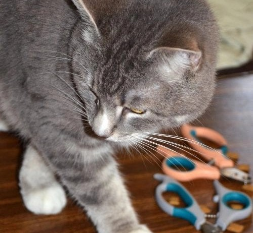 Zen Clipper clips tip of cat's claws, not the quick