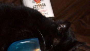 Are your cats giving up partying or napping for Lent?