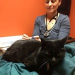 Acupuncture can perform miracles on your cat