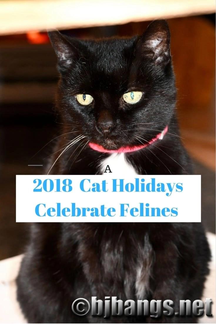 2018 Cat Holidays