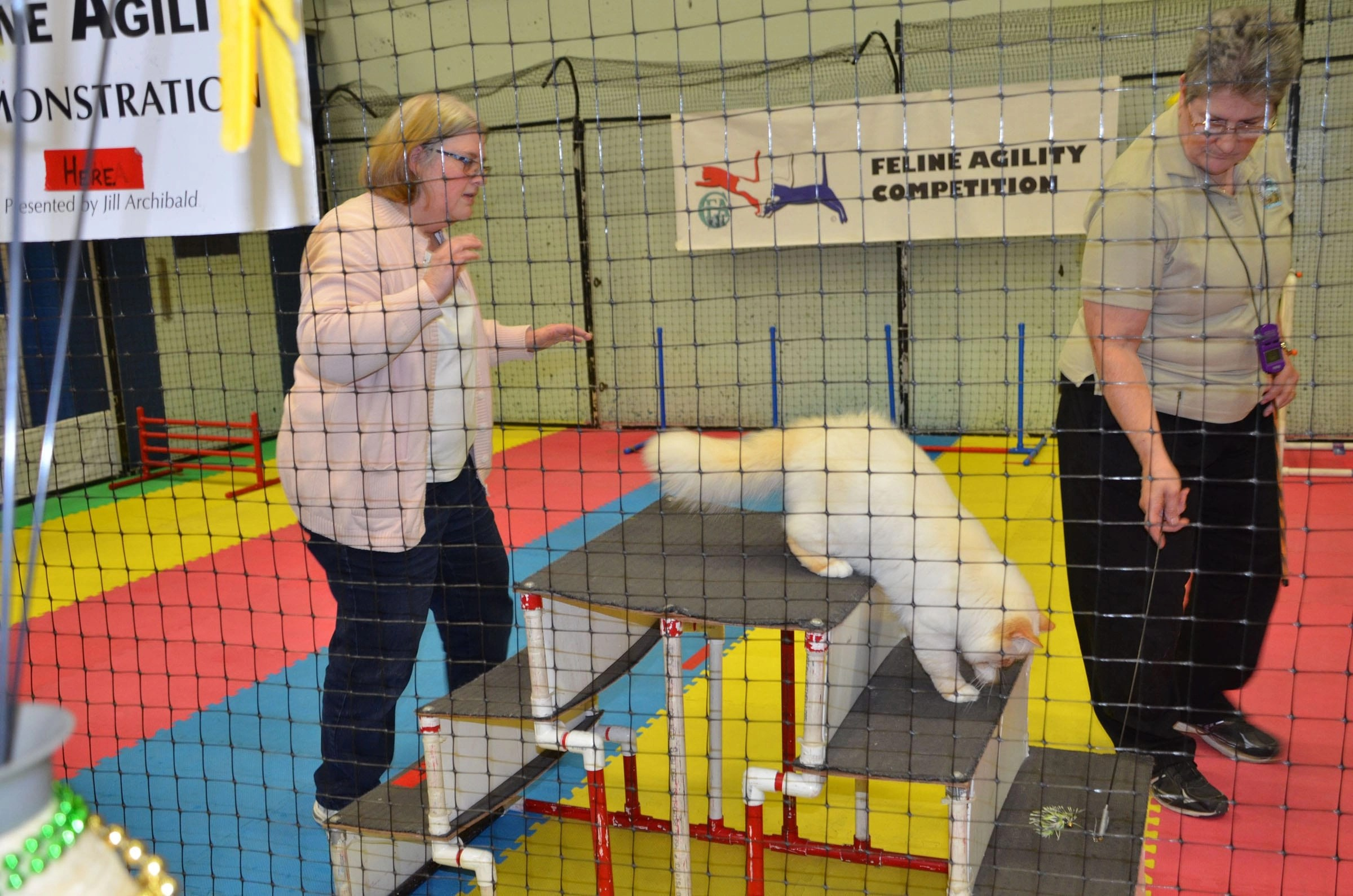 Can cats do tricks? Feline agility competitions prove they can.