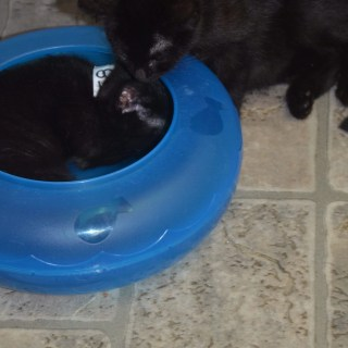 Save Kittens, Support the Kitten Bill