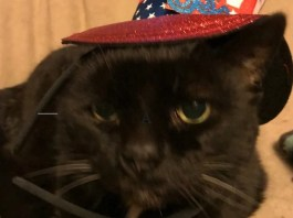Keep your pet safe on The Fourth of July, one of the many 2021 Pet (Mostly Cat) Holidays.