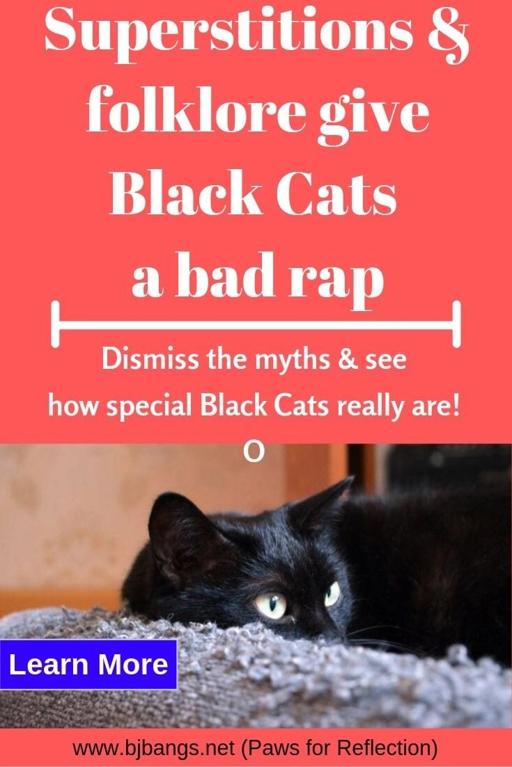 Pin of black cat saying how superstitions & folklore have given black cats a bad rap