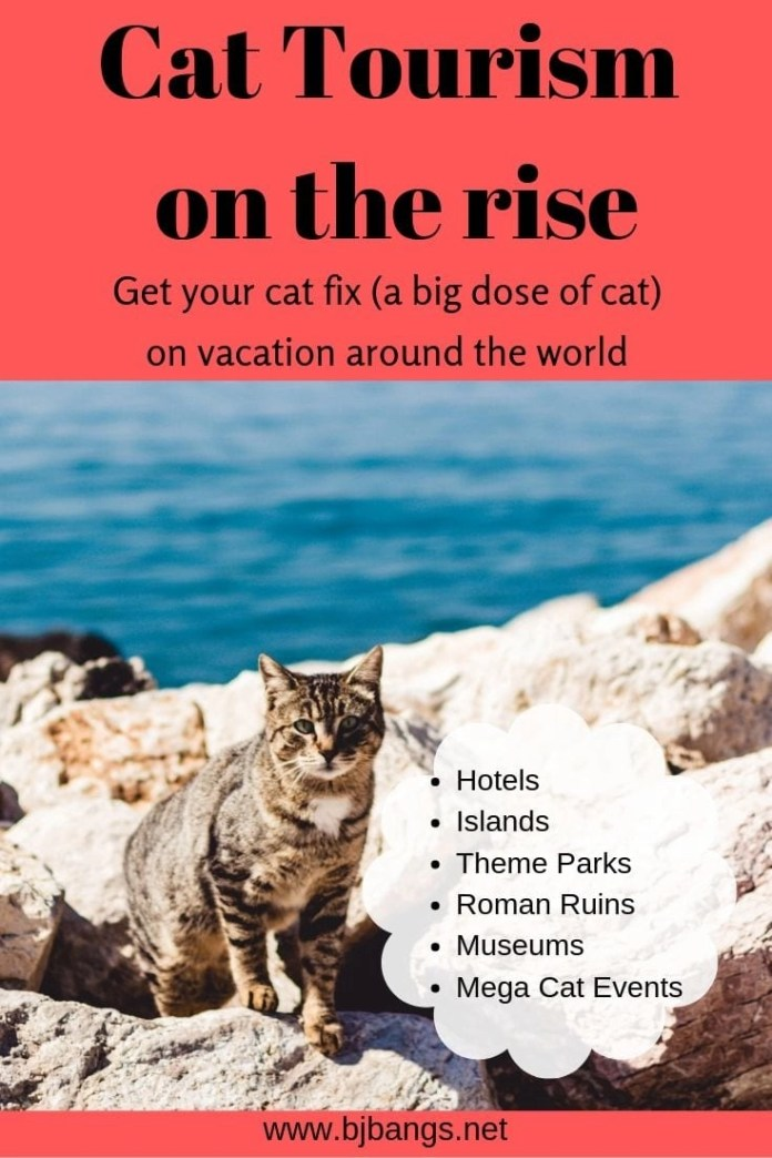 Photo of cat talking about cat tourism being on the rise
