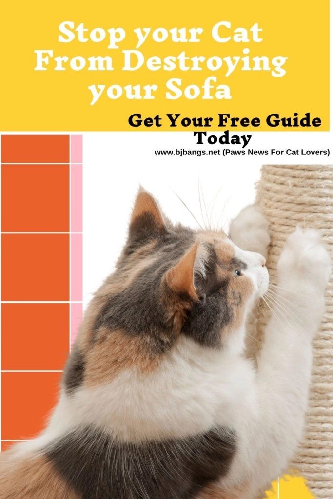 Cats Scratching And Kneading Is A Way Of Communicating But What Are They Telling Us Paws News For Cat Lovers