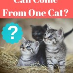 Picture of kittens wondering how many cats can come from one cat