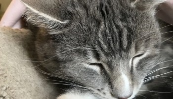 All-American Pet Photo Day is an ideal time to share your cat photos with the world on social media.