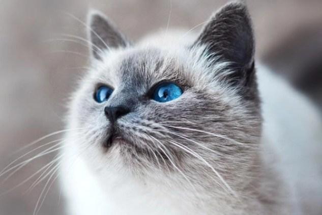 Photo of cat talking about Feline Leukemia Day on July 17.