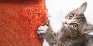 Cat destroying sofa