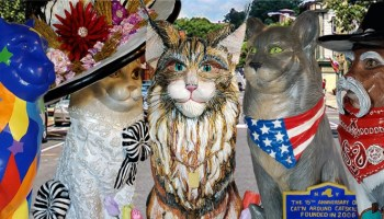 Picture of the artistic cats that are on display at Cat'n Around Catskill