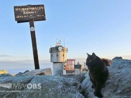 Marty was a Mt Washington cat for 12 years passing away in 2020.