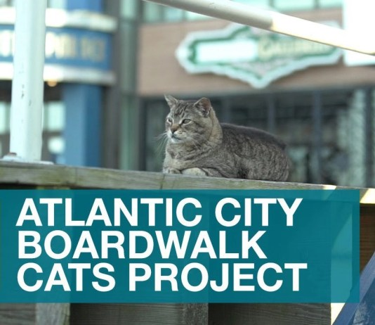 The Atlantic City Legenday cats live on and this is a photo of the sign talking about the project.